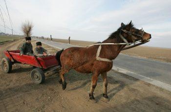 ANALIZĂ. Românii nu mai știu să meargă cu căruța. Cad și își sparg capetele