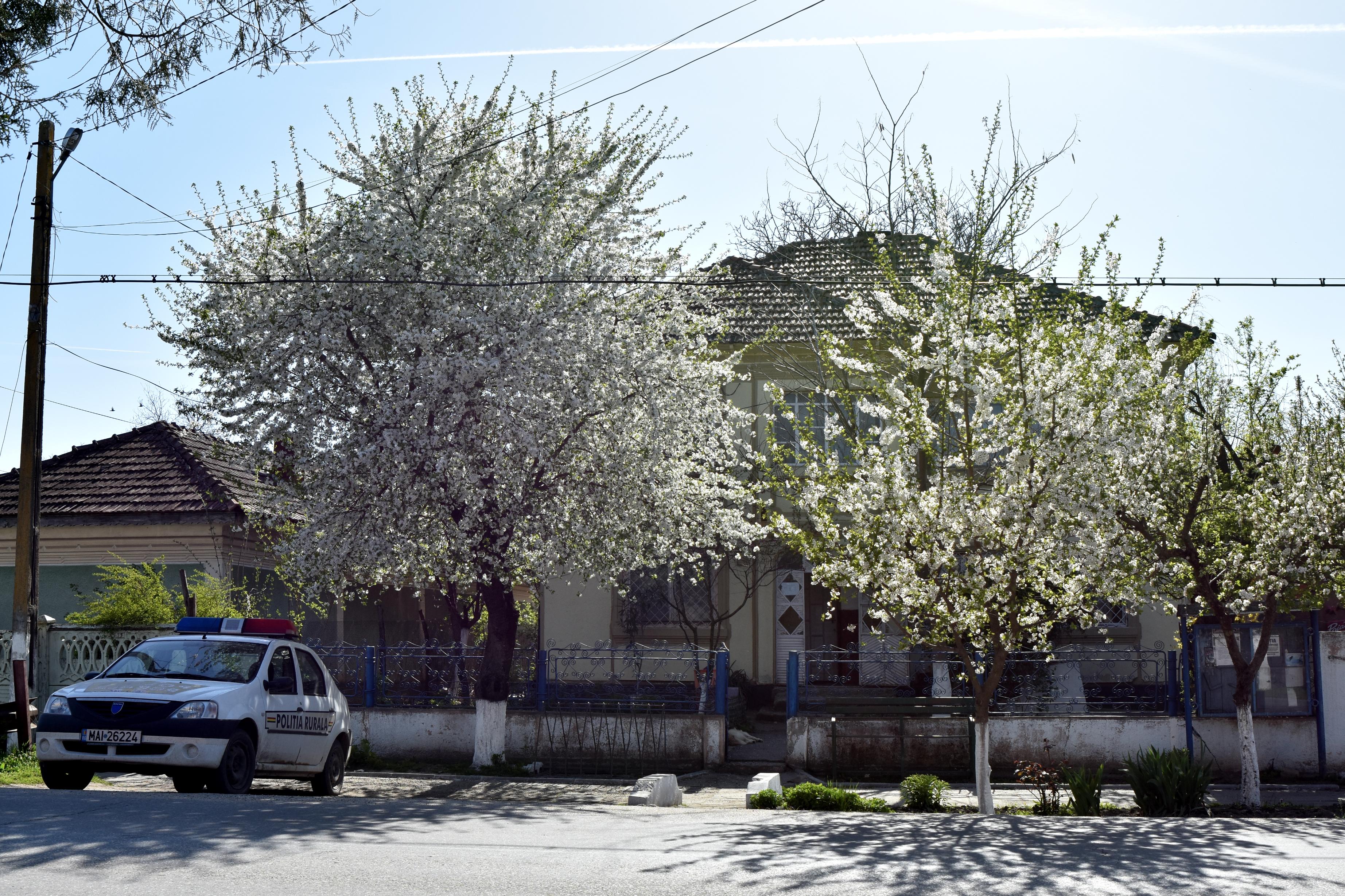 Sediul Poliției din comuna Islaz, unde tatăl lui Liviu Dragnea a fost șef de post la sfârșitul anilor '70 . Clădirea are la etaj o locuință de serviciu. Acolo și-a petrecut Liviu adolescența. FOTO: Recorder