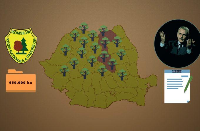 VIDEO. Statul român e pe cale să piardă 20% din păduri, în urma unei legi inițiate de Liviu Dragnea