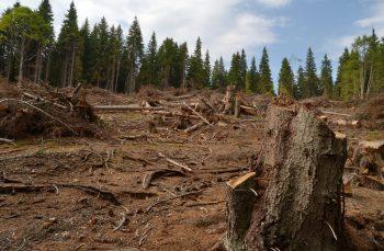 Cum ascunde statul român dimensiunea jafului din păduri: tăieri ilegale de un miliard de euro dovedite științific și șterse din statistici