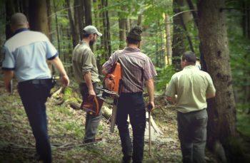 Pe urmele hoților de lemn: cum funcționează sistemul de șpăgi care decimează pădurile României