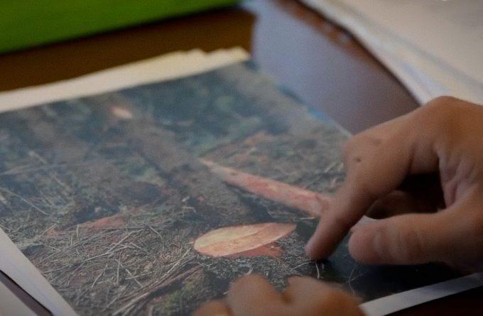 Cum a îngropat Romsilva controlul demarat după o investigație Recorder